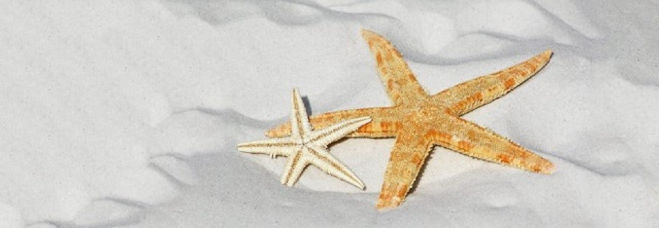 two starfish on a white sandy beach